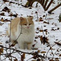 Прогулка по снежку :: Татьяна Смоляниченко