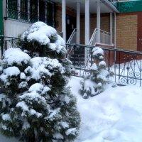 Засыпаны снегом.. :: Елена Семигина