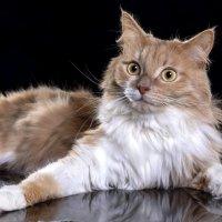 Снова кот :: Эдуард Пиолий