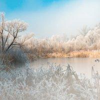 мороз и солнце :: Лилия .