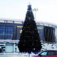 Я не знаю, как у вас, а у нас уже новогодние ёлки по всему городу :: Владимир Ростовский