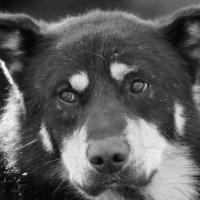 Бездомный пес..... :: Андрей Потапов