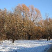 Начало зимы :: Дмитрий Никитин