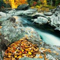 Ручей осеннего леса :: Valentina Ariel