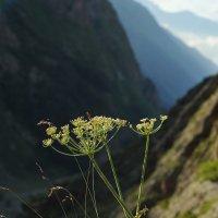 В горах :: Nikolai Savin