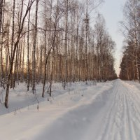 Зимний лес :: Наталья Бычкова
