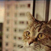 И кошки умеют мечтать! :: Любовь Космачева