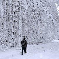 Путешествие в снежное царство :: Николай Белавин