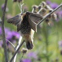 Молодые крылья :: Геннадий Г.