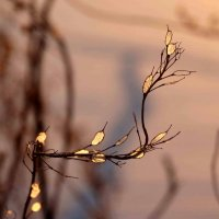 Закатное :: Alla Swan