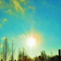 зимнее солнце :: Елена Лунна