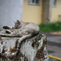 без кота и жизнь не та... :: Наталья Сазонова