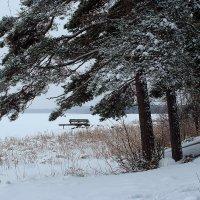 Зима. :: Николай Тренин