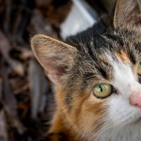 Кошечка которая караулит баню))) :: Геннадий