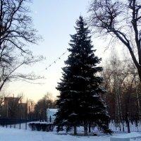 Декабрь,вечер в городе... :: Тамара (st.tamara)
