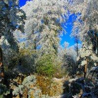 Зимний лес :: Константин Снежин