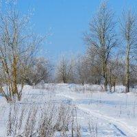 зима :: linnud