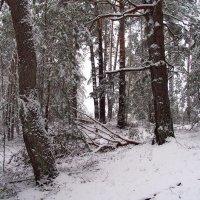 Ветровое снежное затишье... :: Лесо-Вед (Баранов)