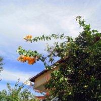 Нежный сад. :: Мила Бовкун