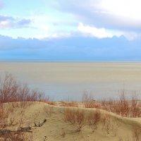 Куршский залив :: Елена Ом
