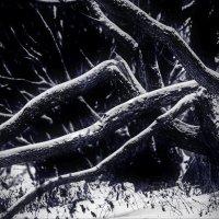 ..там темнота...там леший бродит!... :).. (фото Олега Будаковского).... :: Ира Егорова :)))
