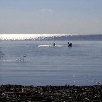 Чудское озеро :: Alla Swan