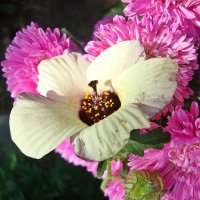 В обрамлении розового :: Лидия (naum.lidiya)