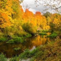 Золотая осень :: Лариса Березуцкая