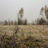 Туман :: uehal999 .