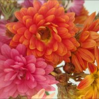 Последние хризантемы :: Нина Корешкова