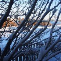 акации в снегу :: Василий Щербаков