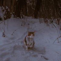 Один в лесу :: Artem Zelenyuk