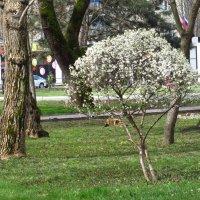 И вечная весна! :: Вячеслав Медведев