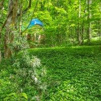 Зелёный ковёр из барвинка. :: Игорь K.