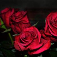 Розы :: Julia Volkova