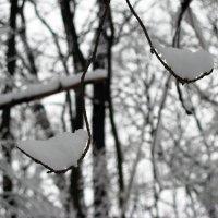 Зимние весы :: Роман Кривеженко
