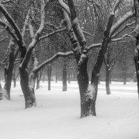 Зимним сном природа спит. :: Валентина ツ ღ✿ღ