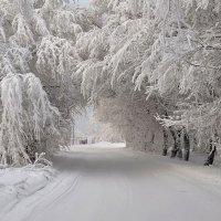 Зимняя арка. :: Марина Фомина.
