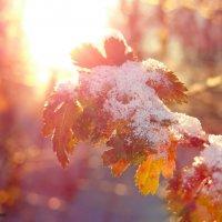 Утренний снежок :: Евгений Замковой