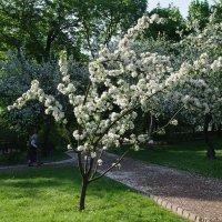 Новая весна :: Александр pet2