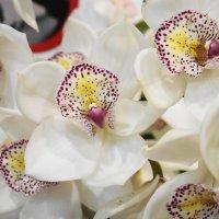 Орхидеи :: Флора