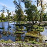 Часть огромной территории сафари для водных птиц и животных :: Юрий Поляков