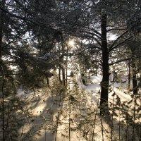 Сквозь лесную чащу (после) :: Иван Балмасов