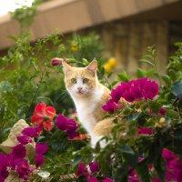 Цветочный котик :: Ефим Журбин