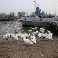 Осенний шабаш лебедей :: Маргарита Батырева