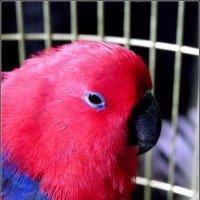 """Выставка птиц в """"Музее варежки"""" :: Galina Belugina"""