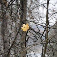 Осенний мотив :: Нина Алексеева