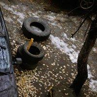авто-лес1 :: Дмитрий Потапов