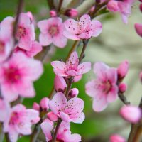кусочек весны :: Oksana Verkhoglyad