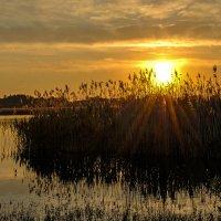 Солнце в Плысках.... :: Александр Бойко